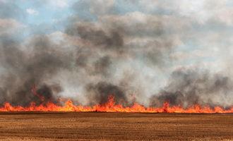 Wheatfire_adobestock