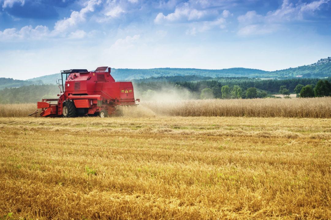 wheat harvest combine