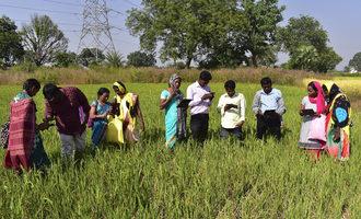 Irri_rice-doctor-being-used-in-odisha-india_photo-cred-irri_e