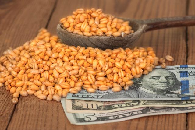Wheatgrainsmoney_photo-cred-adobe-stock_e