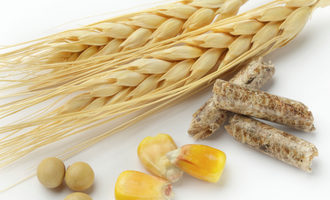 Corn feed soybean wheat adobestock 25911764 e