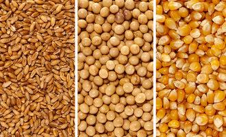 Wheatsoycorn_photo-cred-adobe-stock_e