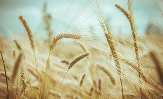 An-ominous-long-term-forecast-for-wheat_wheat_nov_e