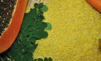 Irri golden rice approved by philippine for food feed processing use photo cred irri e