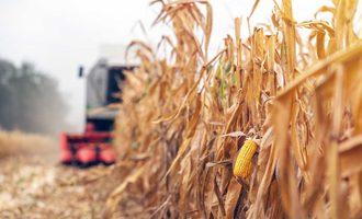 Corn-field_photo-cred-adobe-stock_e