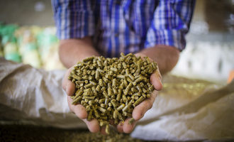 Feed-in-hands_hands_feed_istock-914759392_e