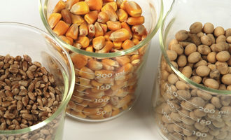 Corn soybean wheat adobestock 11826942 e