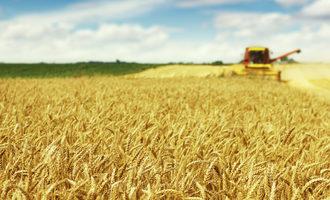 Wheat field adobestock 65088881 e