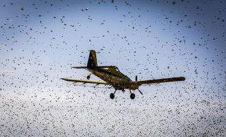 Fao locust swarm photo cred fao