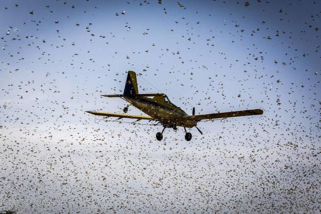 Fao_locust-swarm_photo-cred-fao