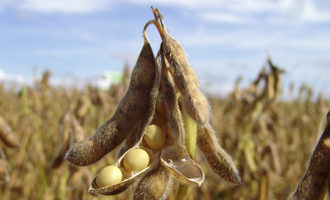 Soybean_adobestock_6437597_e