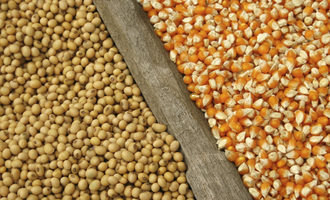 Corn and soybean adobestock 65631699 e
