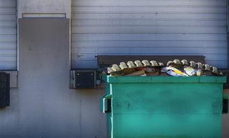 Common pest hiding spots dumpster march e