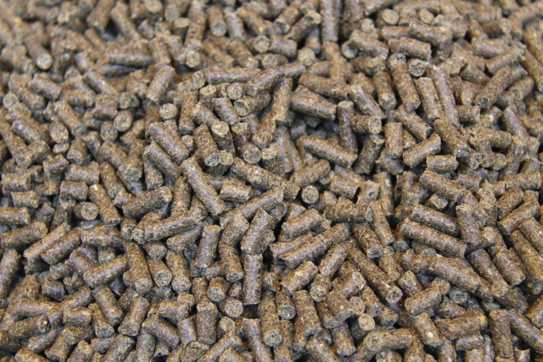 pelleted feed