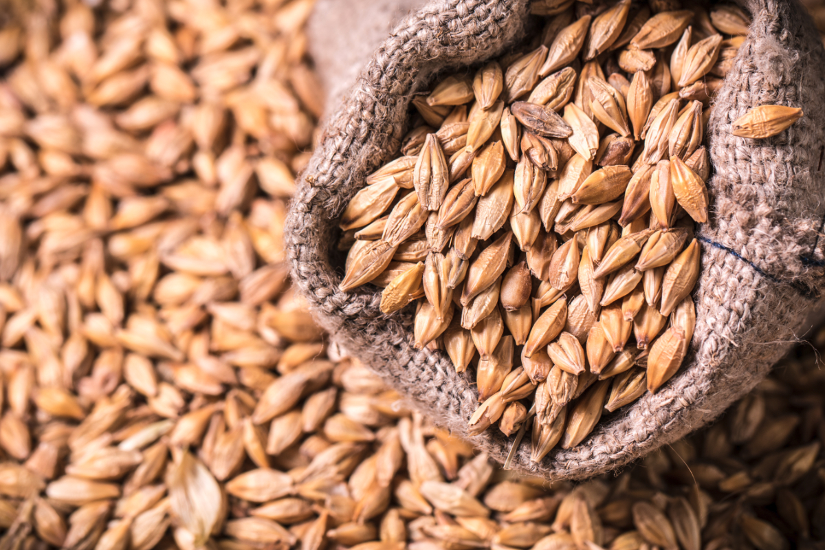 China approves protocol allowing access to US barley | 2020-05-15 | World  Grain