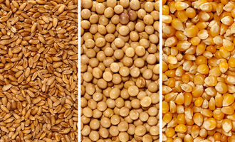 Cornwheatsoy photo cred adobestock e