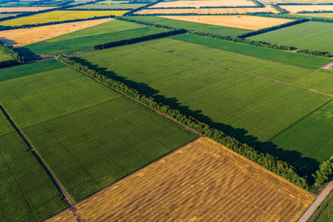 crop fields