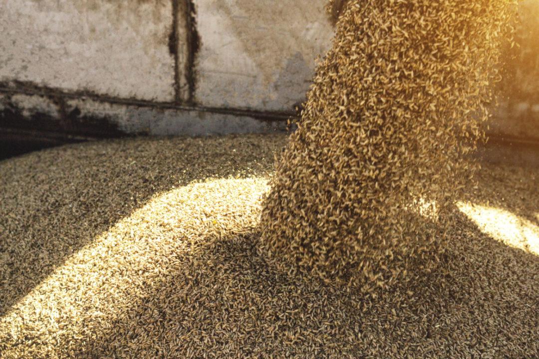 wheat transportation