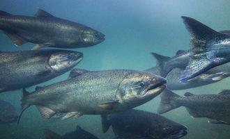 South africas aquafeed output rising adobestock 227986733 may e
