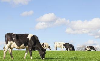 Dairy cow adobestock 99062012 e