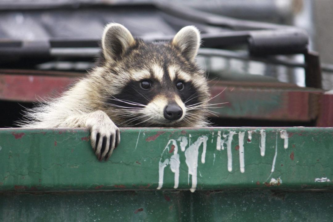 Sanitation and pests