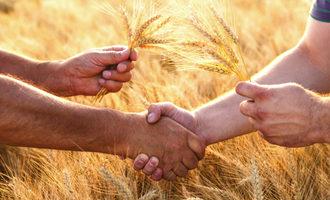 Wheat handshake 2 adobestock 145984303 e