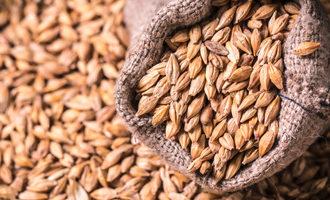 Barley in bag photo adobe stock e