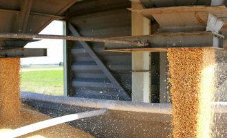 Corn adobestock 101251190 e