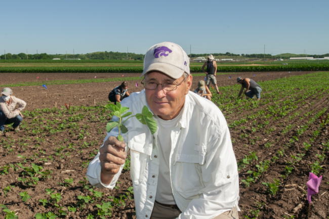 KSU soybean research