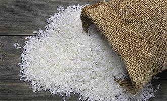 Rice adobestock 64819529 e