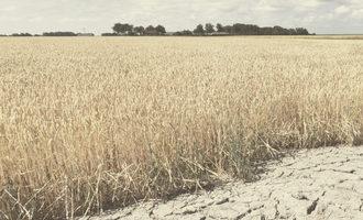 Wheat drought adobestock 277757869 e1