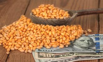 Wheatgrainsmoney photo cred adobe stock e