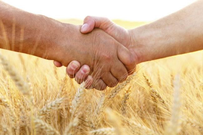 wheat handshake