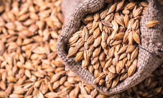 Barley in bag photo adobe stock e