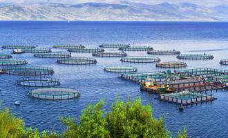Aquaculture adobestock 135467159 e1