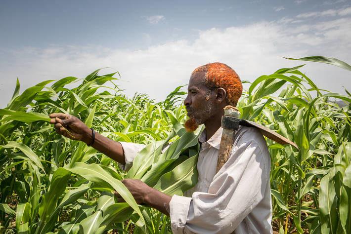 sorghum farmer