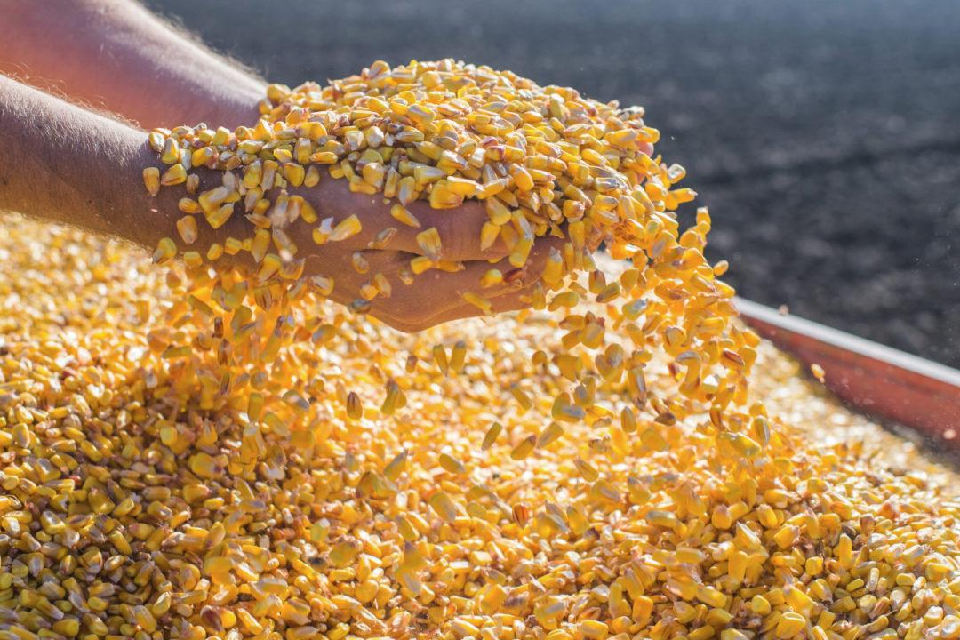 Grain market review: Coarse grains | 2020-09-18 | World Grain