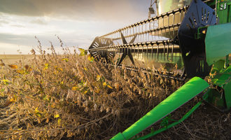 Soybean adobestock 132502728 e