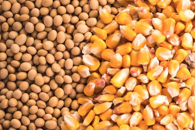 Soybeanscorn photo cred adobe stock e