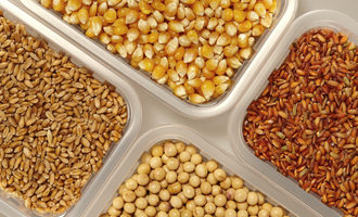 Corn rice wheat soybean adobestock 192641392 e