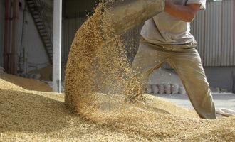 Grain moving adobestock 26233990 e