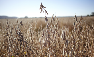 Soybean adobestock 182749858 e