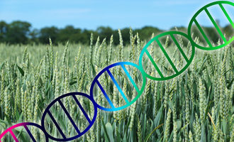 Wheatgenome photo adobe stock e