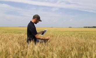Wheat adobestock 169449857 e