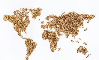 Word map made of wheat grain adobestock 115234703 e