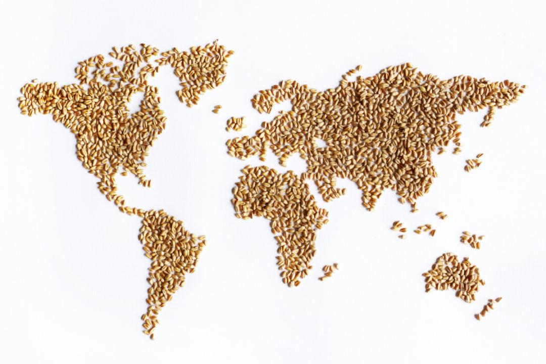 world wheat map