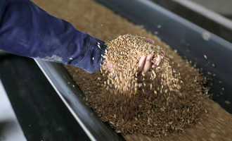 Fao wheat grains on a conveyor belt during its loading for storage in tanks at the chernihiv granary ukraine photo cred fao