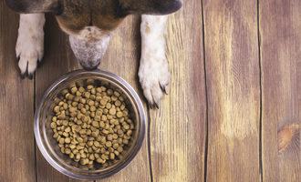 Dog food adobestock 110789787 e