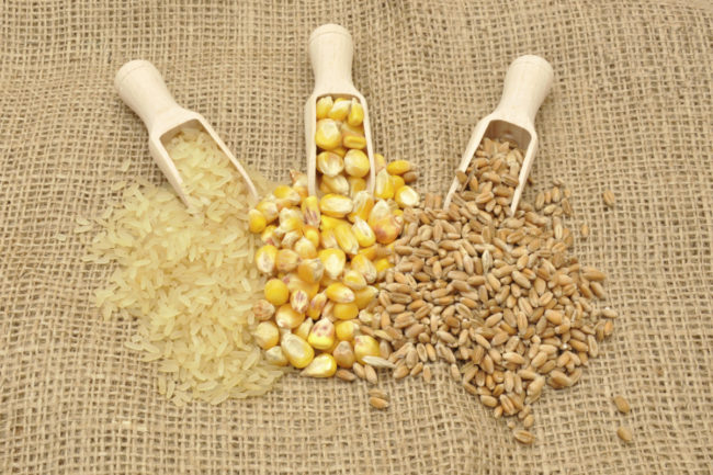 corn rice wheat