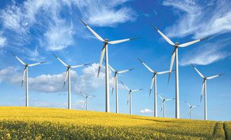 Windfarmcanolafield lead